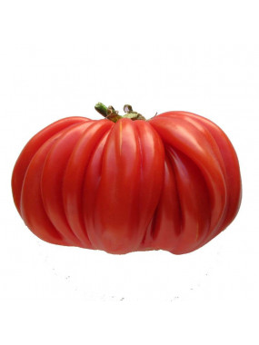 Tomate Charnue